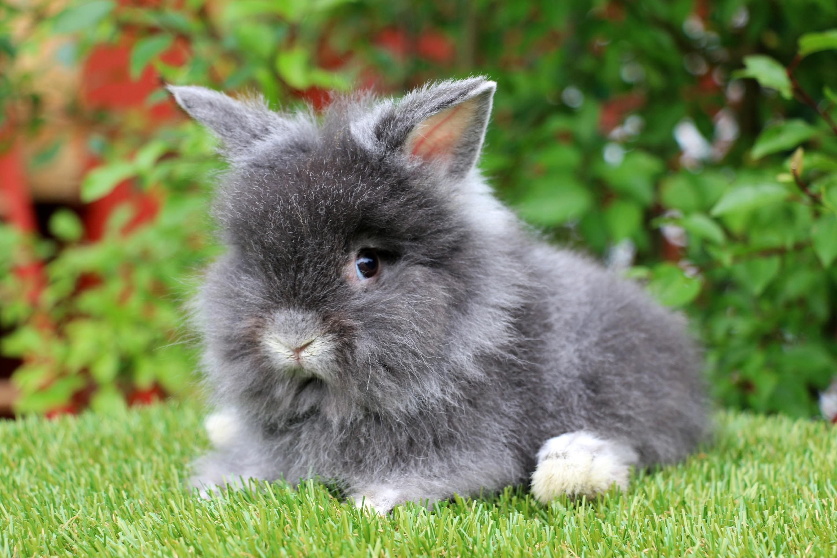 kaniner till salu 2019