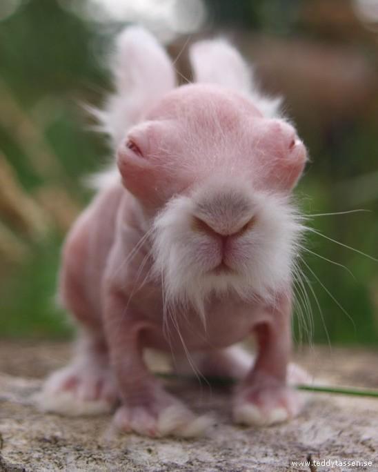 Naken Kanin